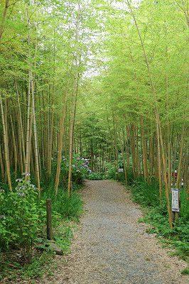 花野辺の里 竹林の中のみch