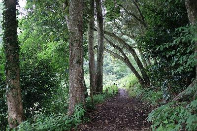 花野辺の里 森の道