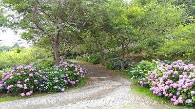花野辺の里 アジサイの道