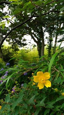 花野辺の里 黄色い花