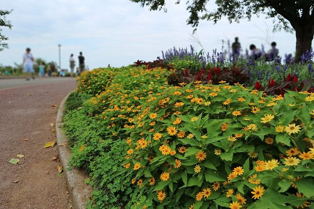 さくらの山公園の花壇