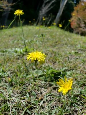 八森野球場で撮った花1