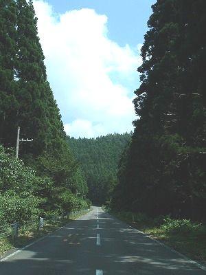 鳥海ブルーライン 杉林の中を通る